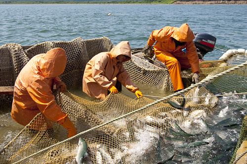 охрана труда для рыбаков прибрежного лова